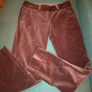 Louie Jeans Velvet crops
